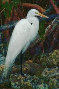 FL_egret art