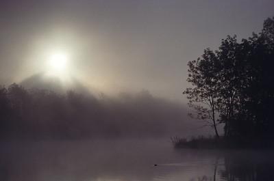 Beaver at Misty Sunrise SR