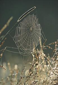 Spider Web Backlit HiRes ALG
