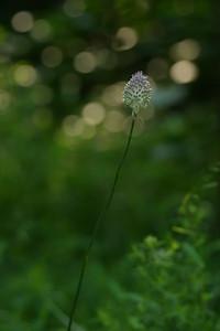 Meadowlark_IMG_3600