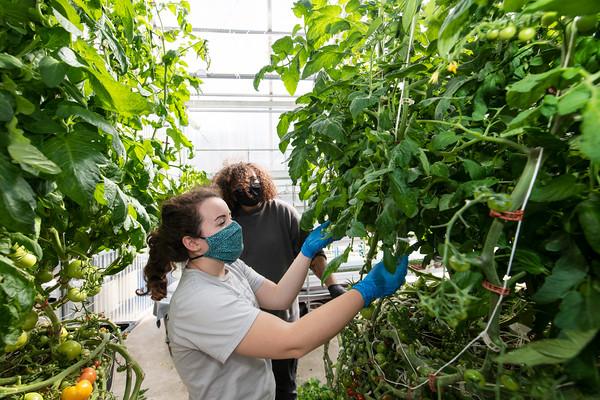Office of Sustainability Greenhouse & Gardens program
