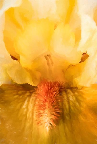 07-16-15 Yellow Iris
