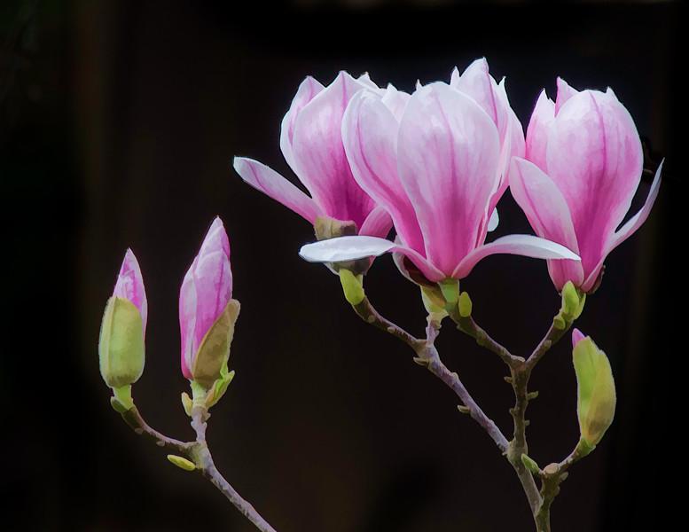 01-27-15 Spring Flowers