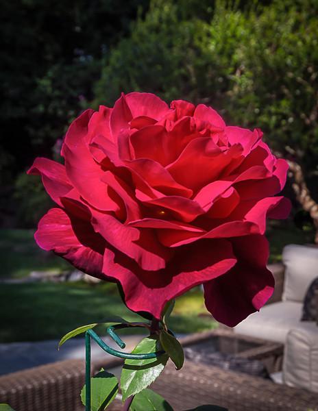05-05-14 Mr Lincoln