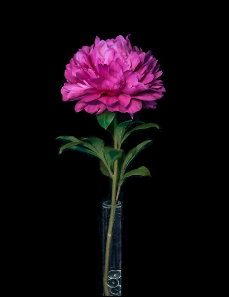05-03-16 First Pink Peony