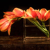 01-17-16 Orange Tulips