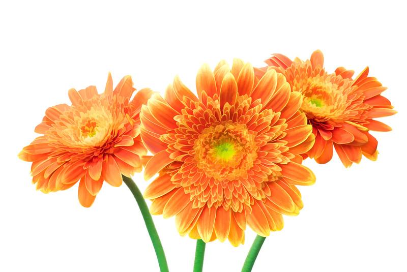 07-18-15 Orange Gerbera's Painted