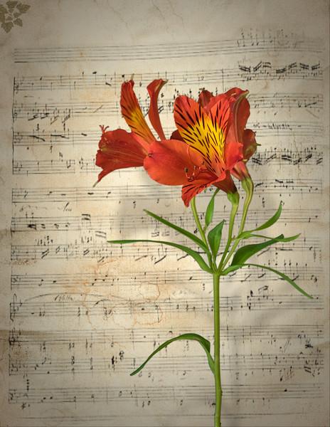 AFS L11 Flower Music composite