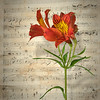 AFS L11 Flower Music composite