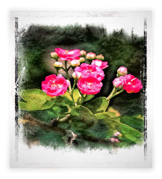 Hawthorne Flowers Painted