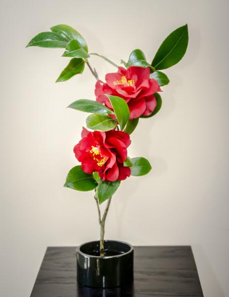 03-15-14 Camellia Ikebana