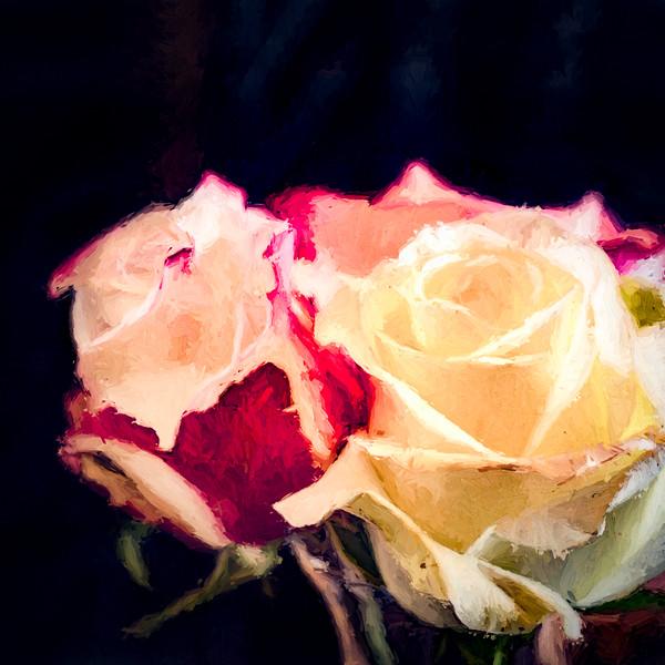 Roses Chiaroscuro
