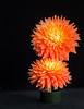 08-07-14 Orange Dahlia