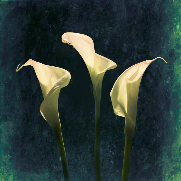Playing with Callas
