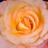 10-19-15 Rose Stack 2-7509-Edit