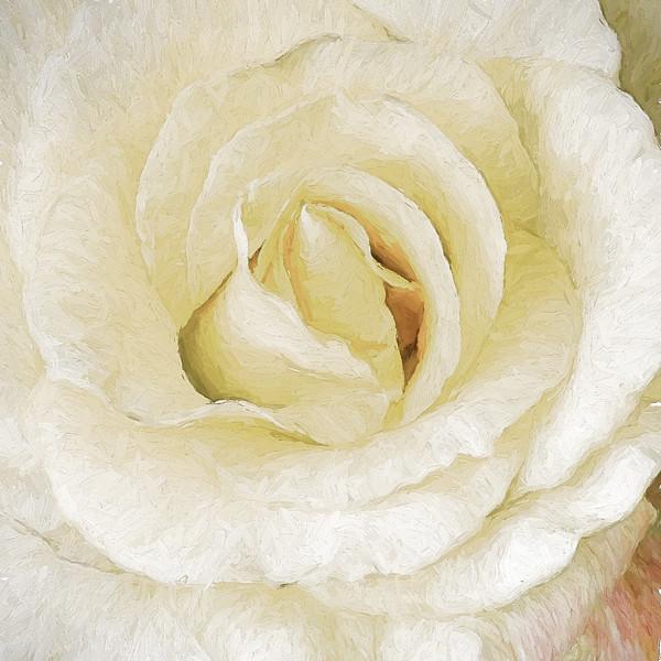 10-19-15 Rose Stack 2-7509-Edit-Edit-2-Edit
