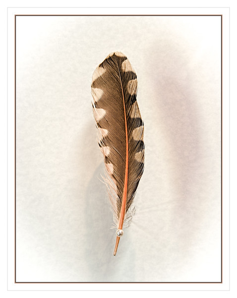 AFS L11 Hawk Feather