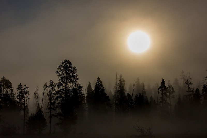 Heavy fog in Yellowstone