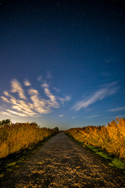 A Dirt Road on a Starry Night