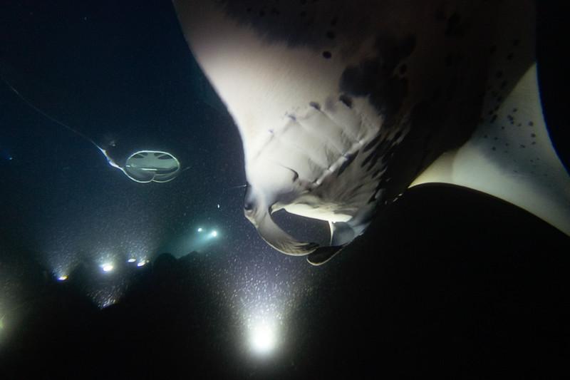 Manta Ray Dive 1