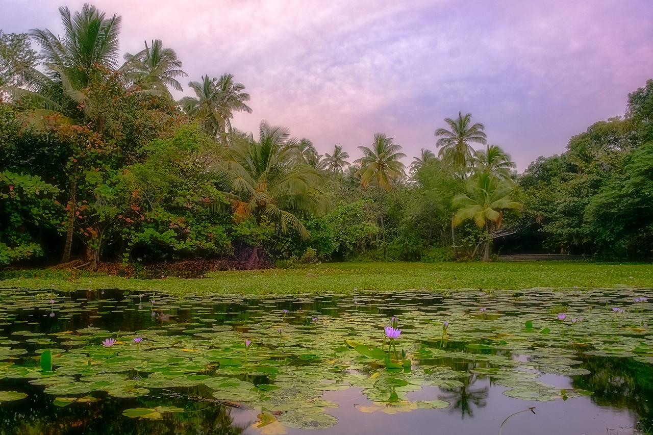 Pond by Black Sands Beach