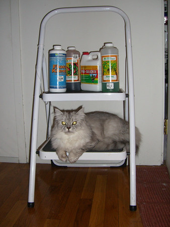 The hydroponic cat
