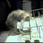 The curious kitty