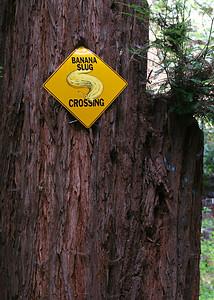 3750 Banana Slug Sign