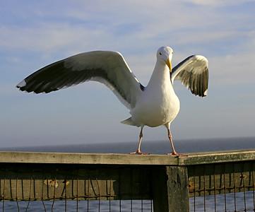 3886 Gull