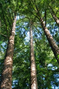 3742 Tall Trees orton
