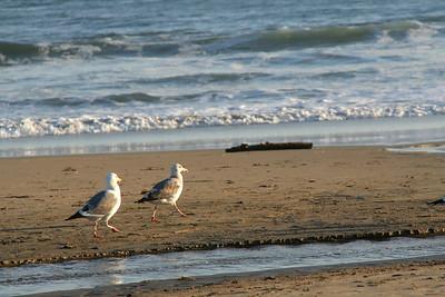 3944 Gulls