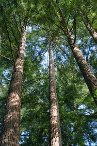 3742 Tall Trees