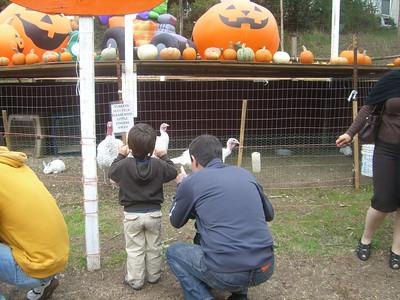 Turkeys and bunny rabbits show off