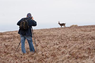 Shooting a buck on Pt. Reyes