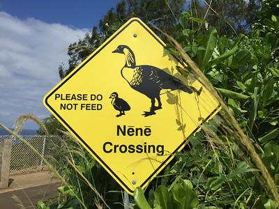 """Néné""... but can you catch and cook them?"