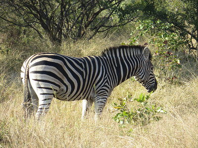 "We told our guides ""We want to see zebras"" and 30 minutes later..."