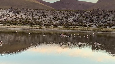 The lagoons are home to thousands of flamingos.