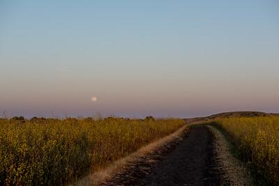 Channel Islands - Potato Harbor Field Moonrise