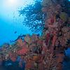 Fish, coral, mast