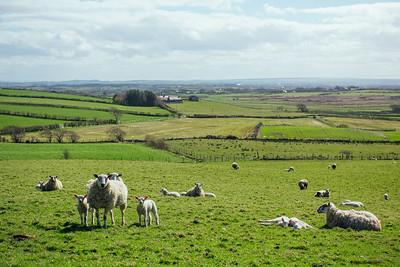 North Ireland Countryside