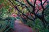Under the Canopy Dunedin Botanic Gardens