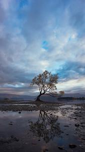 Wanaka Tree Reflection Portrait