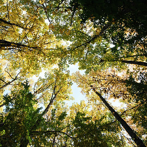 Queenstown Hill Canopy