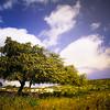Yellow Tree, Blue Sky.