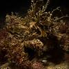 Collector crab