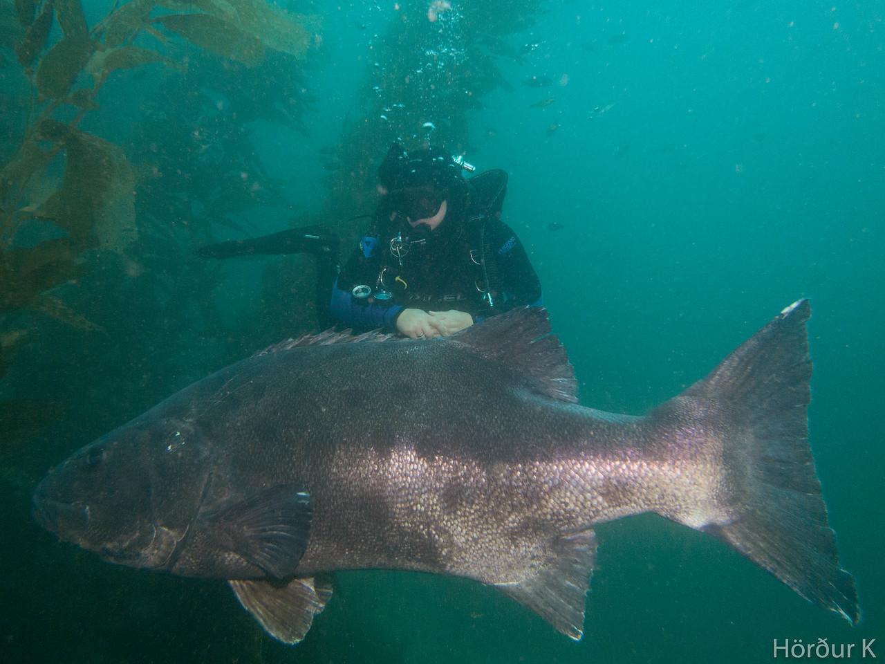 Me next to Giant Black Sea Bass