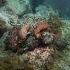 Sea hare orgy