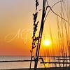 Beach Grasses at Sunrise
