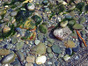 Beach stone, Strait of Juan De Fuca