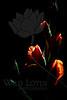 Jack-O-Lantern<br /> <br /> Flower pictured :: Gladiolus<br /> <br /> Flower provided by :: Babylon Floral<br /> <br /> 071212_012987 ICC sRGB 16in x 24in pic
